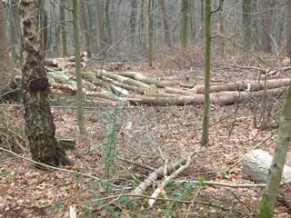Bosbouw1