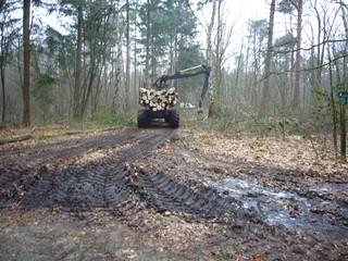 Bosbouw2