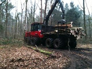 Bosbouw3