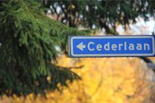 ceder2